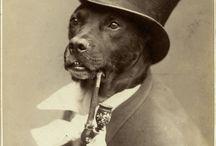 Vintage pit bull picsphoto