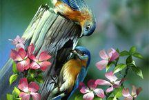 Aves / by Deyanira E. Figueroa