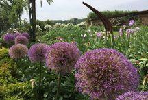 Autres fleurs des Jardins / Les Jardins du Château de Vullierens sont bel et bien réputés pour leurs iris et lys-hémérocalles, mais regorgent également de pleins d'autres fleurs et plantes plus intéressantes les unes que les autres!