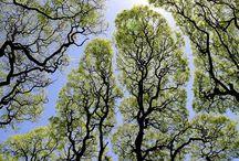 Tree Love / 0