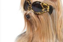 Fashionable pets