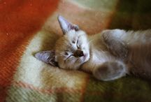 Let sleeping cats lay / by chrissy s