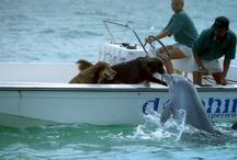 Delfines !!!