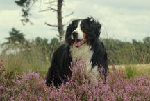 Foto's van Baily en Yara / Foto's van onze honden
