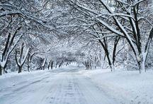 Seasons Greetings / by Victoria