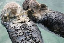 Adorable, loving animals / Animals showing their love in different ways around the world!