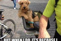 #DogsOfPinterest