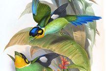 *****ornitologia5