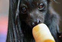 Awwww bat