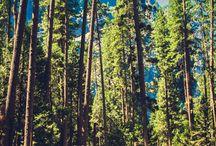 Visit Yosemite / by HipTraveler