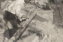 El Campello en el recuerdo: agricultura / El Campello, no hace tanto, era un pequeño pueblo de agricultores y pescadores que vivían en zonas bien diferenciadas del mismo y cuyas vidas transcurrían de forma paralela, aunque a veces se unían, y en realidades muy distintas. Aquí algunas fotos de los trabajos en el campo