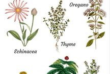 Healing - herbs, spices, seeds, roots