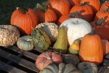 Best Austin Pumpkin Patches / To make your favorite Halloween activity search easier, Realty Austin has compiled a list of the the best Austin pumpkin patches. Use our comprehensive list and map of the the best Austin pumpkin patches to create your own autumn adventure.