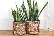 Home Plants / by Katrina Massey Photography