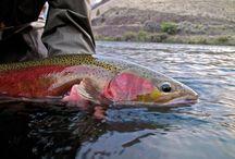 DESCHUTES RIVER OREGON / Fly fishing the Dechutes river.