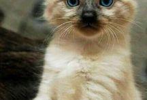 Кошки и котята❤