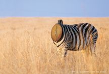 SAVE OUR FORESTS. SAVE THE ZEBRA