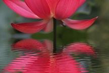 Fleur/Plante/Jardin / by Laure Anne