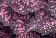 Kamerplanten / Kleurrijke kamerplanten herontdekt.