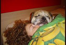My love, my bulldog / Me & Mr Pio, my miracle ♥