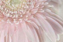 natuur bloemen ja echt en dieren / by Bianca Gordebeke