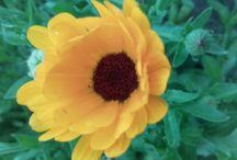 Virágok -Flowers