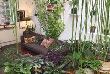 Rośliny różne :)