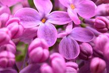 Delicate <3 / #colours #delicatetouch