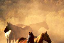 chevaux               ševo