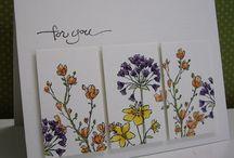 S/U  Flowering Fields