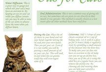 oils for cat