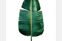 Greenspiration / Green