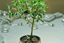 Tuscany Olive Tree Wedding