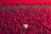 Garden / by Aline Talia