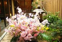 Garden I Love