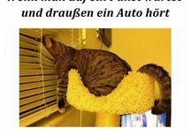 Katze witzig