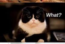Hahahaha! / by Rebeca Gambino
