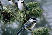 winter / by Kay Lynn Woods Sumner