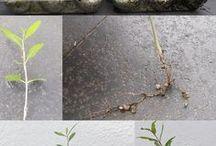 Gardening / Plants seeds green fingers