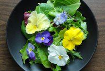 Pratos com flores comestíveis