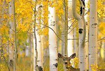 Luonto