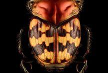 美しい甲虫