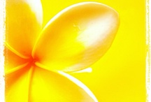 Yellow For Happiness & Energy / Yellow is associated with warmth, joy, happiness and positive emotions but use it in moderation in design to avoid a sensation overload...best in moderation. / by Phoenix Artistry