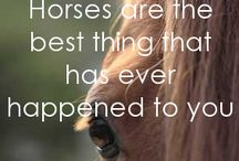 Beautiful about horses
