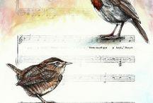 bird ~ madár