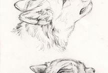Postures (animals)