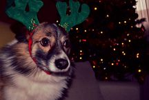 M A X / My lovely dog!
