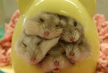 Cuddle Time! / Cute animals I want to snuggle. ^^ / by jandtheholograms *