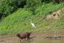 Amazon Jungle / Amazing places in the Amazon