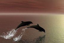Delfini & Elefanti